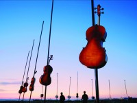 Harmonic Fields